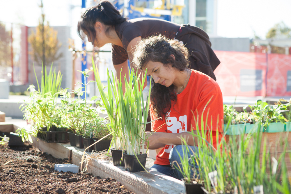 "Science World Interpretive Garden Build: ""How Does Your Garden Grow?"""