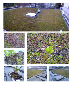 09-11-20-radha-green-roof-green-roof-winter-maintenance-visit-1montage (1)